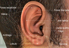 Anatomia do orelha externa, média e interna