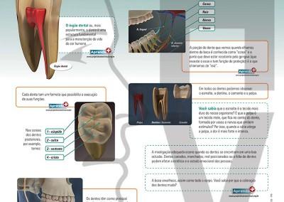 Estrutura dental